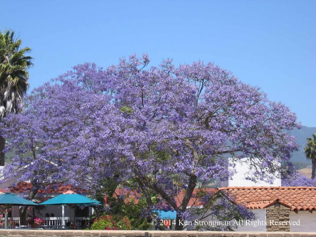Santa Barbara Presido
