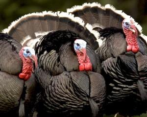 Turkey Conflict